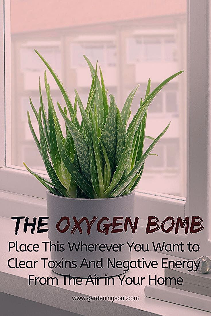 The Oxygen Bomb Place This Wherever You Want to Clear Toxins Negative Energy From The Air at Home Keep a few of these in your home to improve the quality of the air you b...