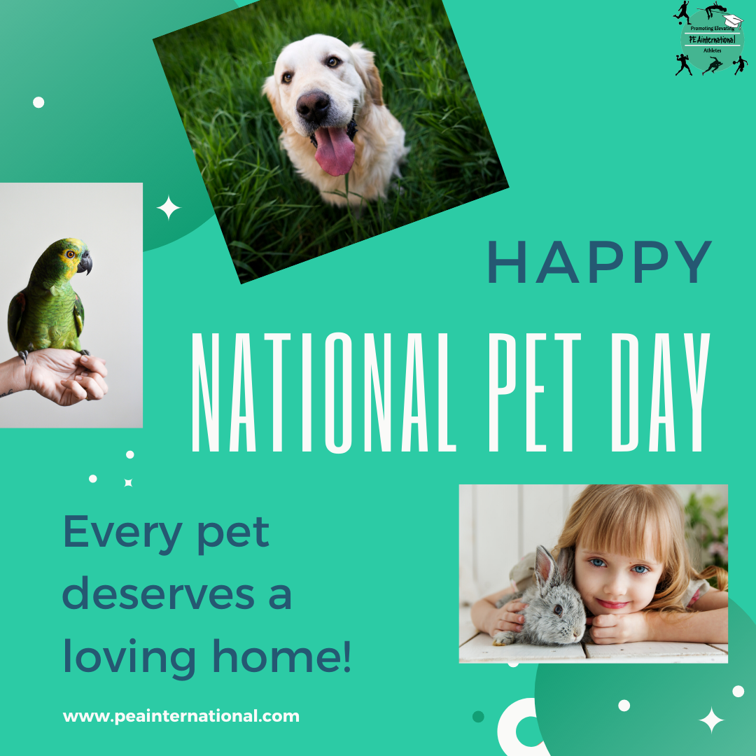 Happy National Pet Day I Hope Many Of You Have Wonderful Amazing Pets At Home To Keep You Company During These Times Of Isolation Every Pet Deserves A Lovin V 2020 G