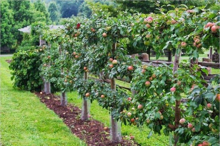 17 Brilliant Fruit Trees Gardening Ideas Small Backyard