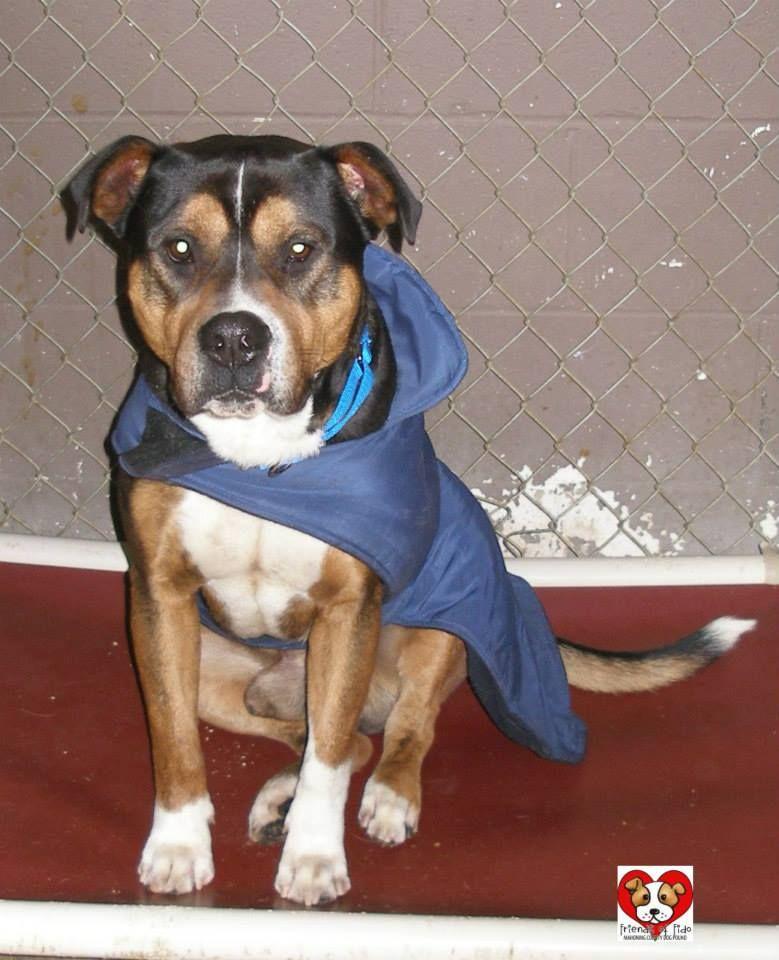 Adopt 61 Boone 1 Rto On Adoption Mixed Boy Handsome