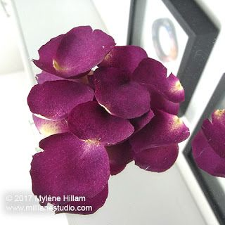 Drying And Preserving Flowers For Resin Diy Resin Flowers How