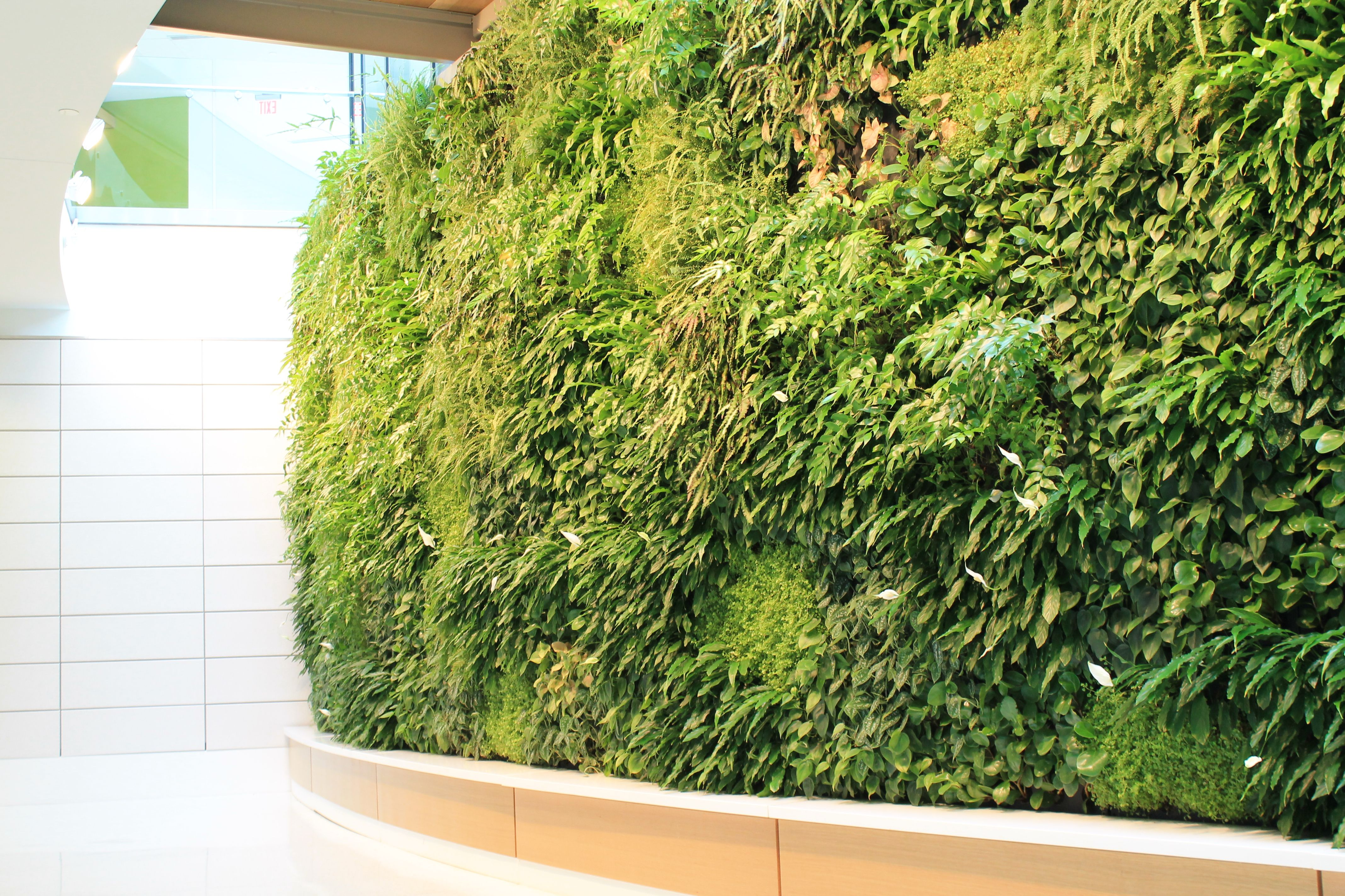 Green wall and bench google search vertical greenery for Vertical green wall