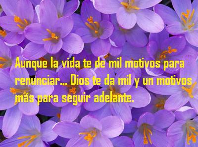Imagenes Bonitas De Flores Con Frases Flores Bonitas