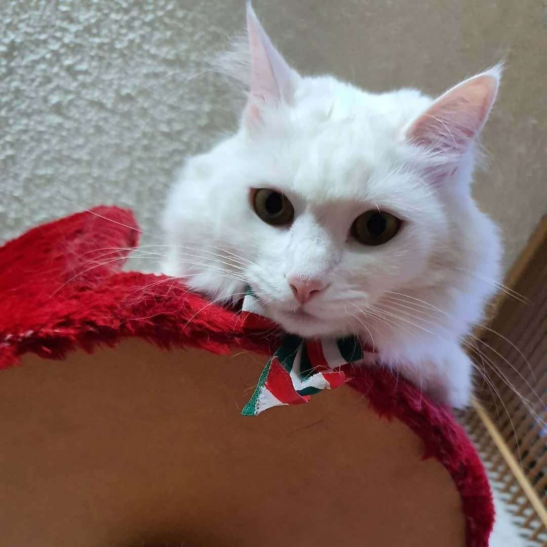 Cat Xray Price Uk Ucat Test Cat Facts Cat Images Decath 7 Cats B Cat Prisons Cat Mask