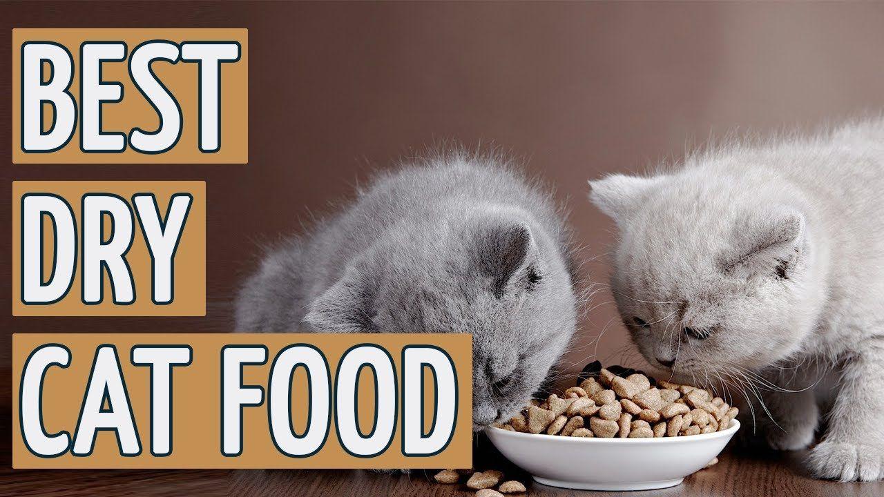 Best dry cat food brands top 9 dry cat foods cat food