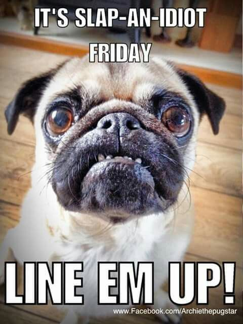 Pin By Gregg Thacker On Pug Haven Pugs Funny Pug Memes Pugs