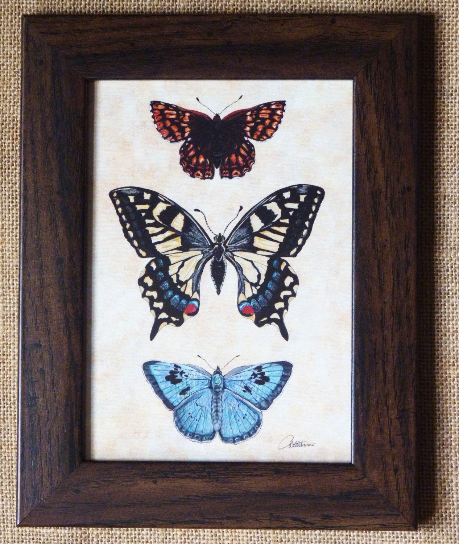 Butterfly Painting Butterflies framed Butterfly Art - Duke of ...