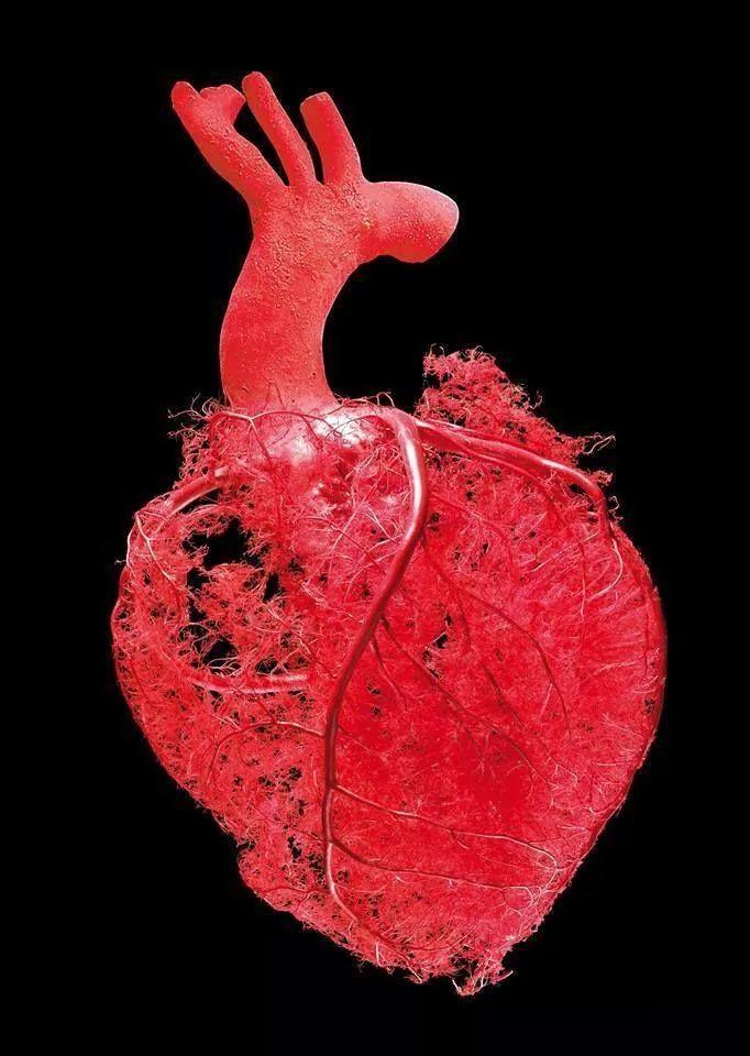 So Circulacao Corpo Humano Coracao Anatomia Anatomia