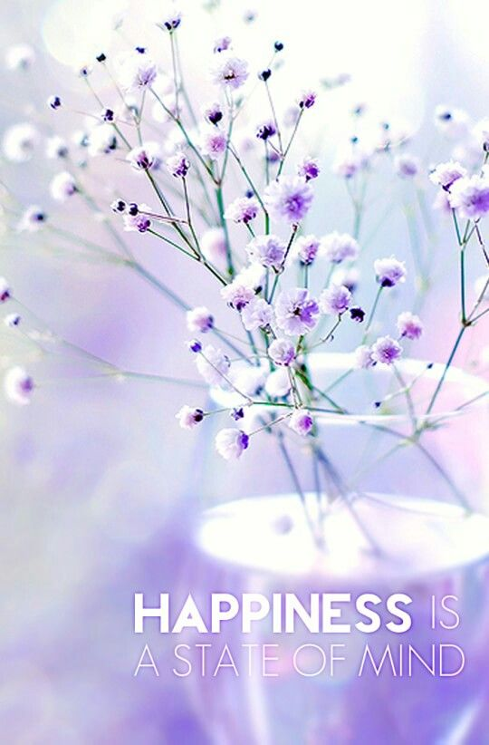 Babies Breath Quotes Babys Breath Flower Pictures Beautiful Flowers