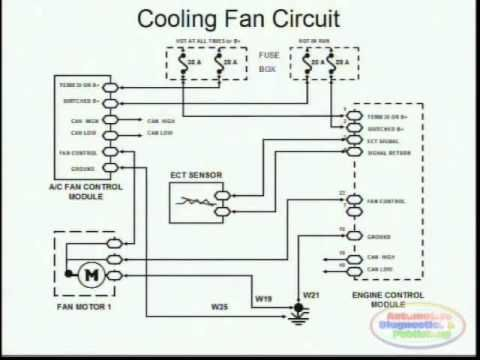 Cooling Fans Wiring Diagram Youtube Diagram Cooling Fan Electric Cooling Fan