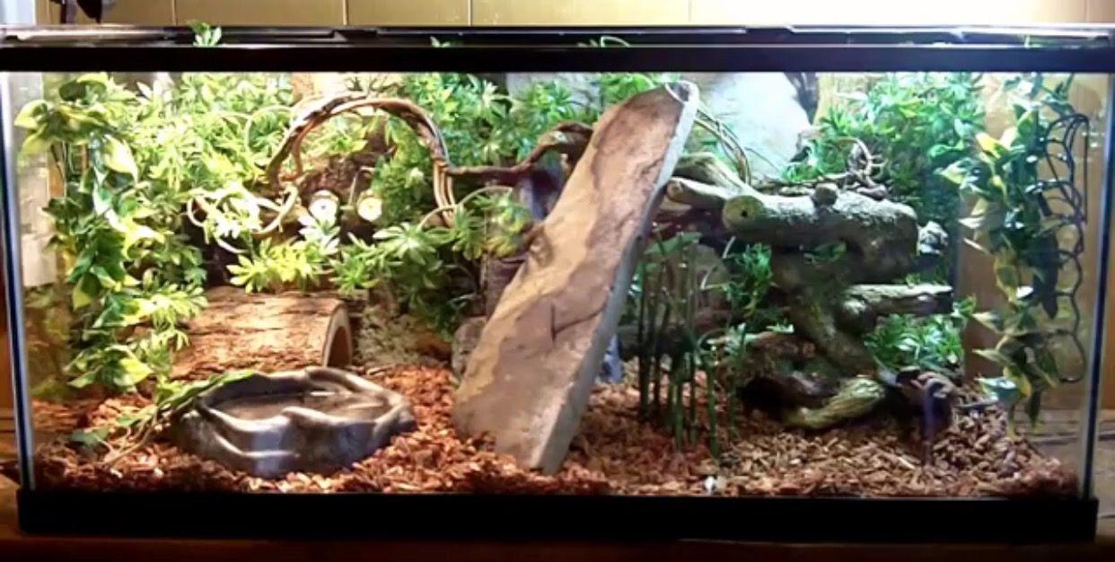 Ball python terrarium | Pets | Ball python Snake ...