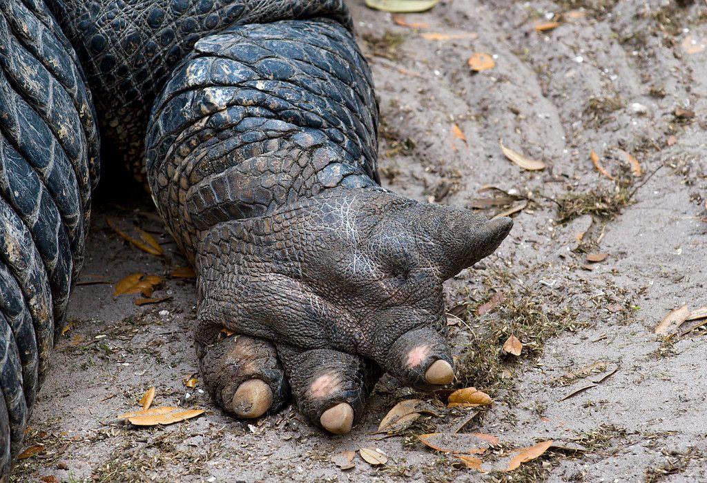 http://www.photockie.com/Travel/North-America/St-Augustine-Alligator-Farm/i-P4fpVHH/0/XL/Gators_(2_of_7)-XL.jpg