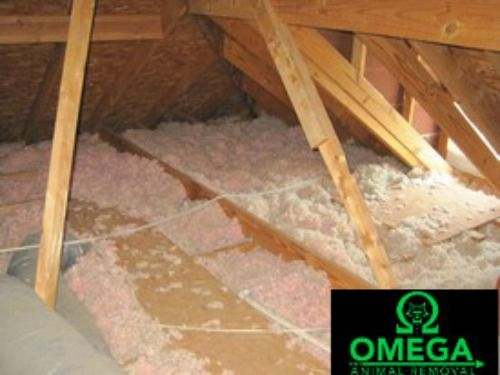 In The Case Of A Severe Infestation An Attic Restoration May Be The Only Way To Keep Your Home Healthy For You And Your Family Pest Control Restoration Pests