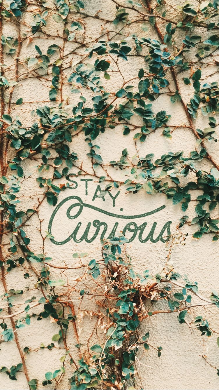 Stay Curious Find More Super Cute Wallpapers For Your IPhone Android Prettywallpaper