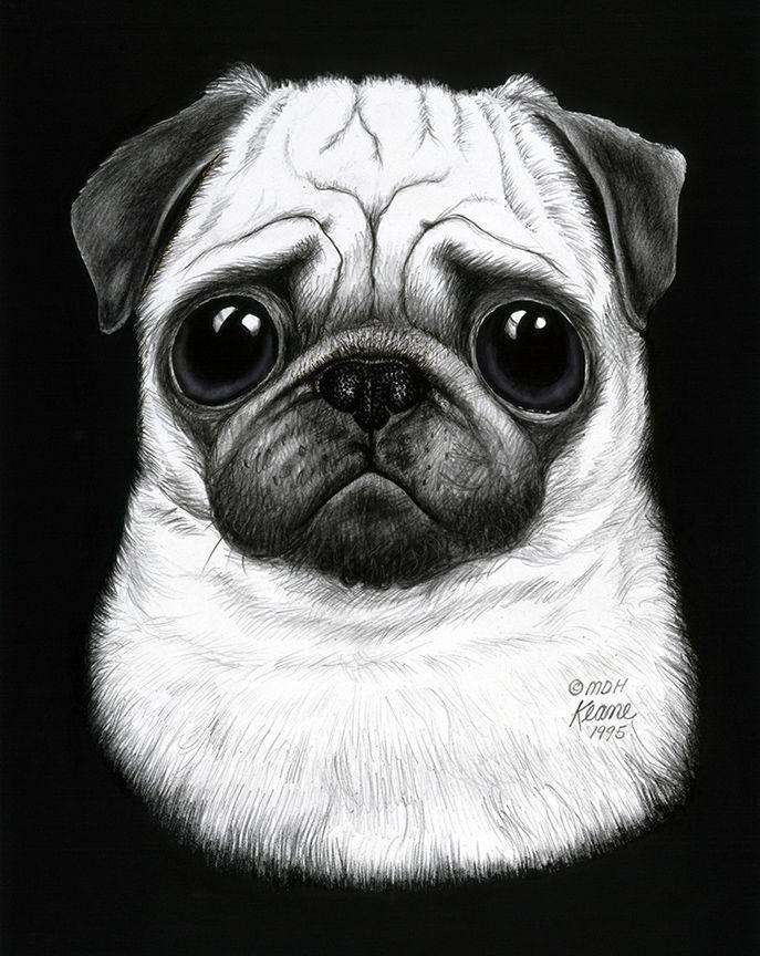 39bd5a95693 Worried towhead | Pugs | White pug, Black, white pug, Pugs