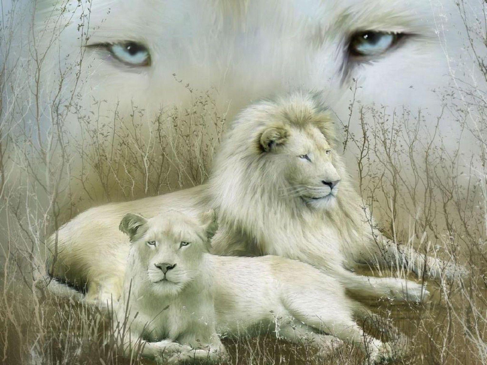 Wild Animals White Lion blue eyes wallpaper Animal