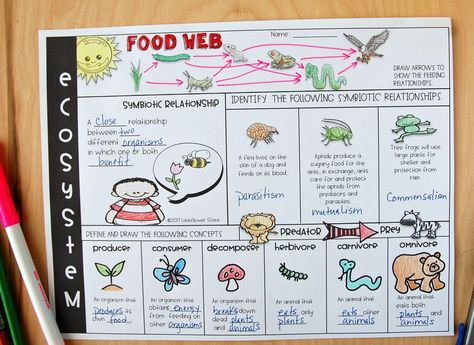 Ecosystem Review Worksheet Middle School Science Activities Biology Classroom Middle School Lesson Plans