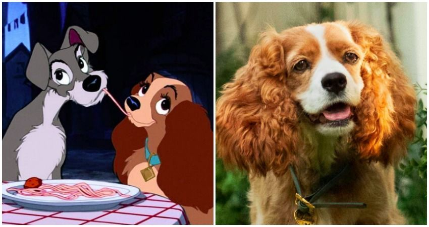 First Look At The Cast Of The Disney Lady And The Tramp Remake Disney Ladies Lady And The Tramp Disney Live Action