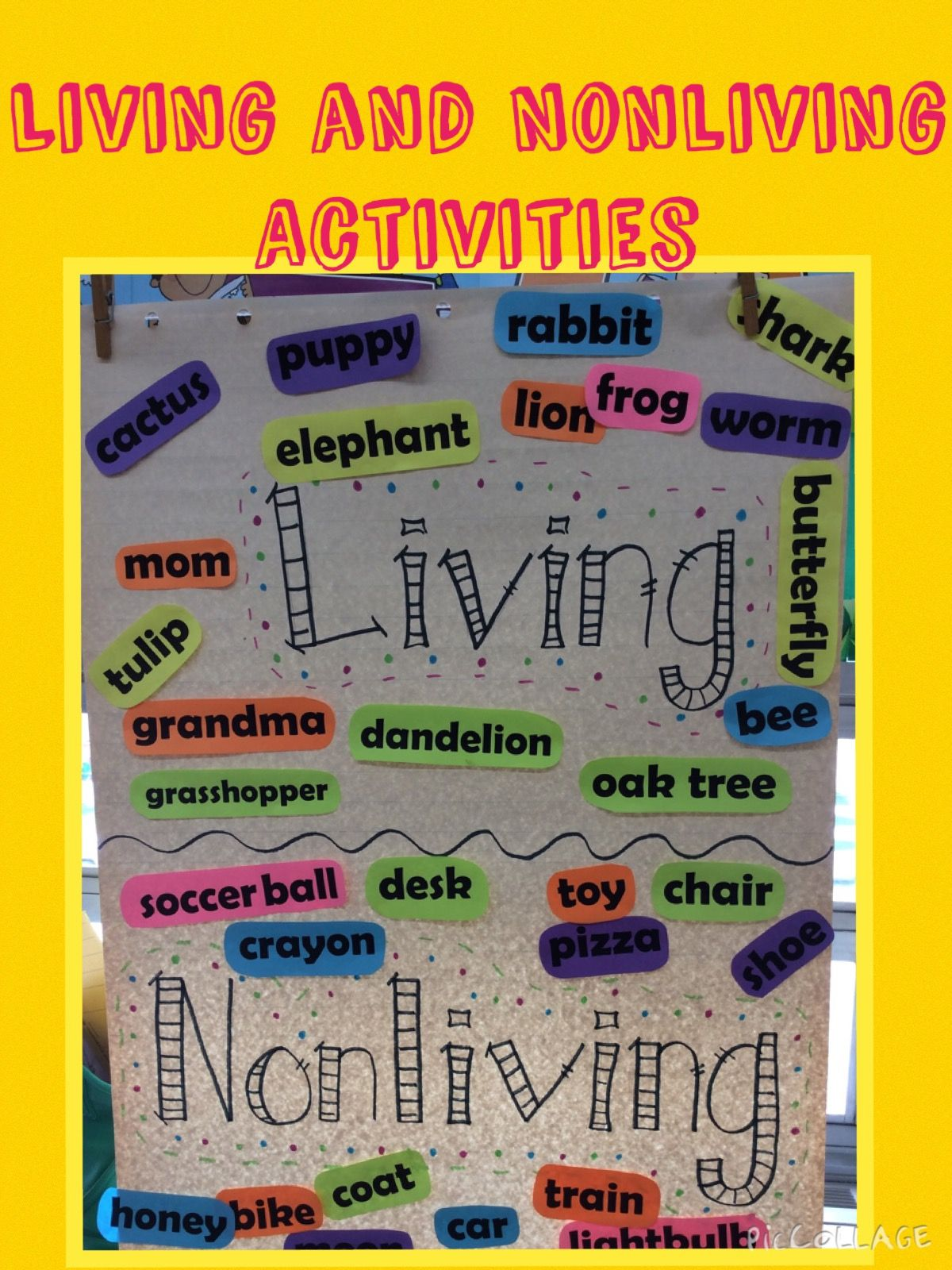 Living And Nonliving Foldable And Activities Living And Nonliving Nonliving Science Activities For Kids [ 1600 x 1200 Pixel ]