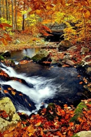 Autumn Leaves Live Wallpaper