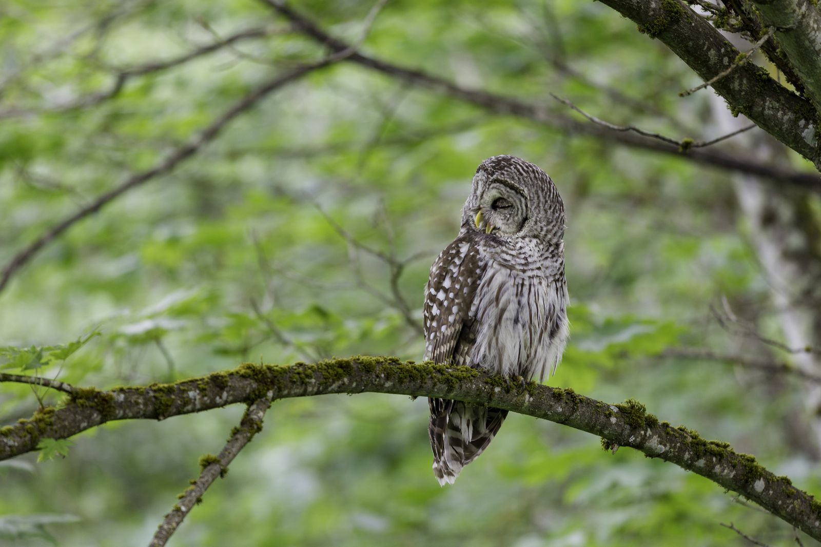 How To Attract Owls To Your Yard With An Owl Box