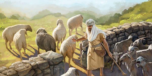 Pastor separando ovelhas de cabritos