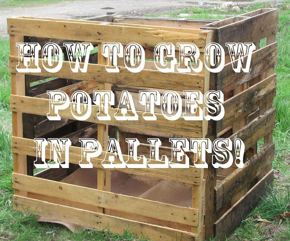 How to grow potatoes in a pallet container pinterest for What to grow in a pallet garden