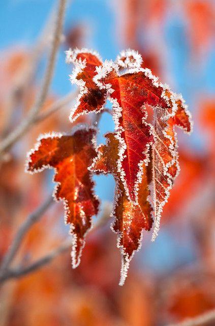 First Autumn Frost Flot Natur Blomstermaleri Foto