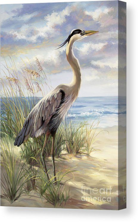Canvas Art by Laurie Snow Hein is part of Heron art - Blue Heron Deux Canvas Print by Laurie Snow Hein   All canvas prints are professionally printed, assembled, and shipped within 3  4 business days and delivered readytohang on your wall  Choose from multiple print sizes, border colors, and canvas materials