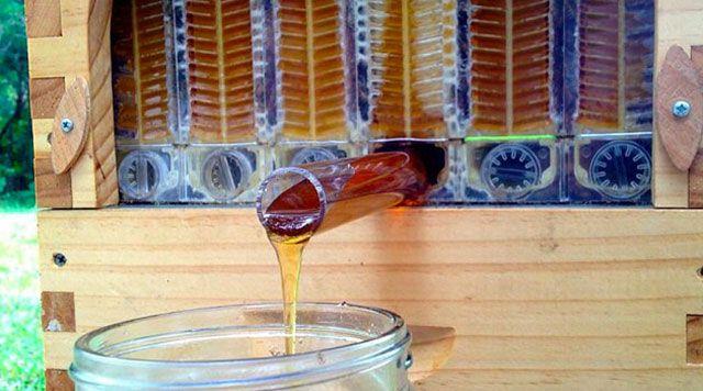 Invention : une ruche automatique pour récolter le miel sans déranger les abeilles - automatic hive to collect honey without disturbing the bees