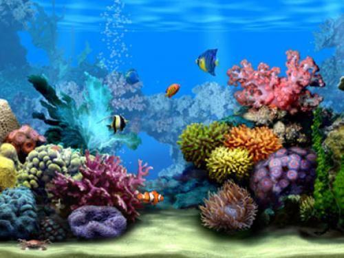 3d Marine Aquarium Wallpaper Moving Wallpapers Free Moving Wallpapers Tropical Fish Aquarium