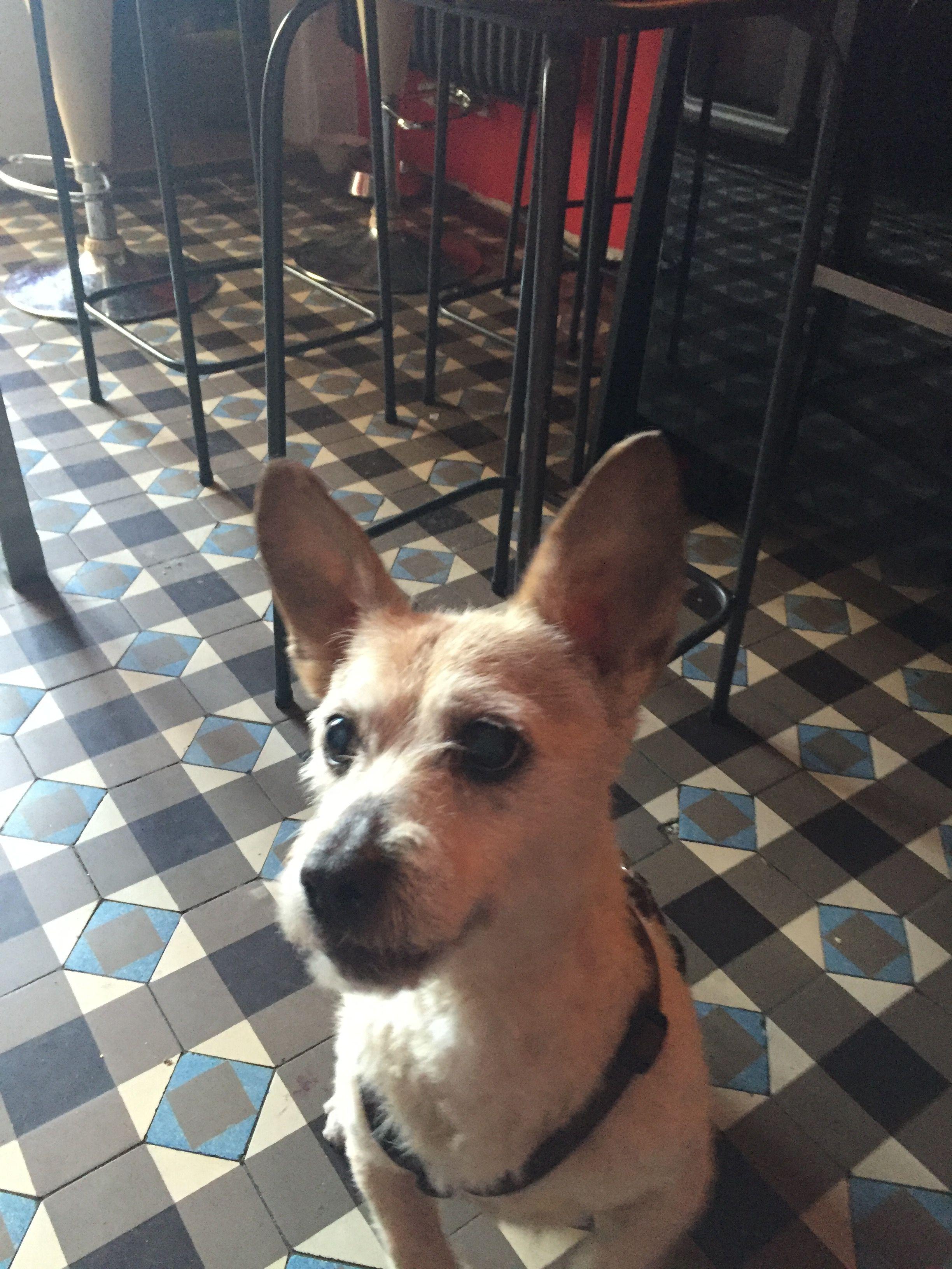 Terry Terrier Mix Pawshake Hunde