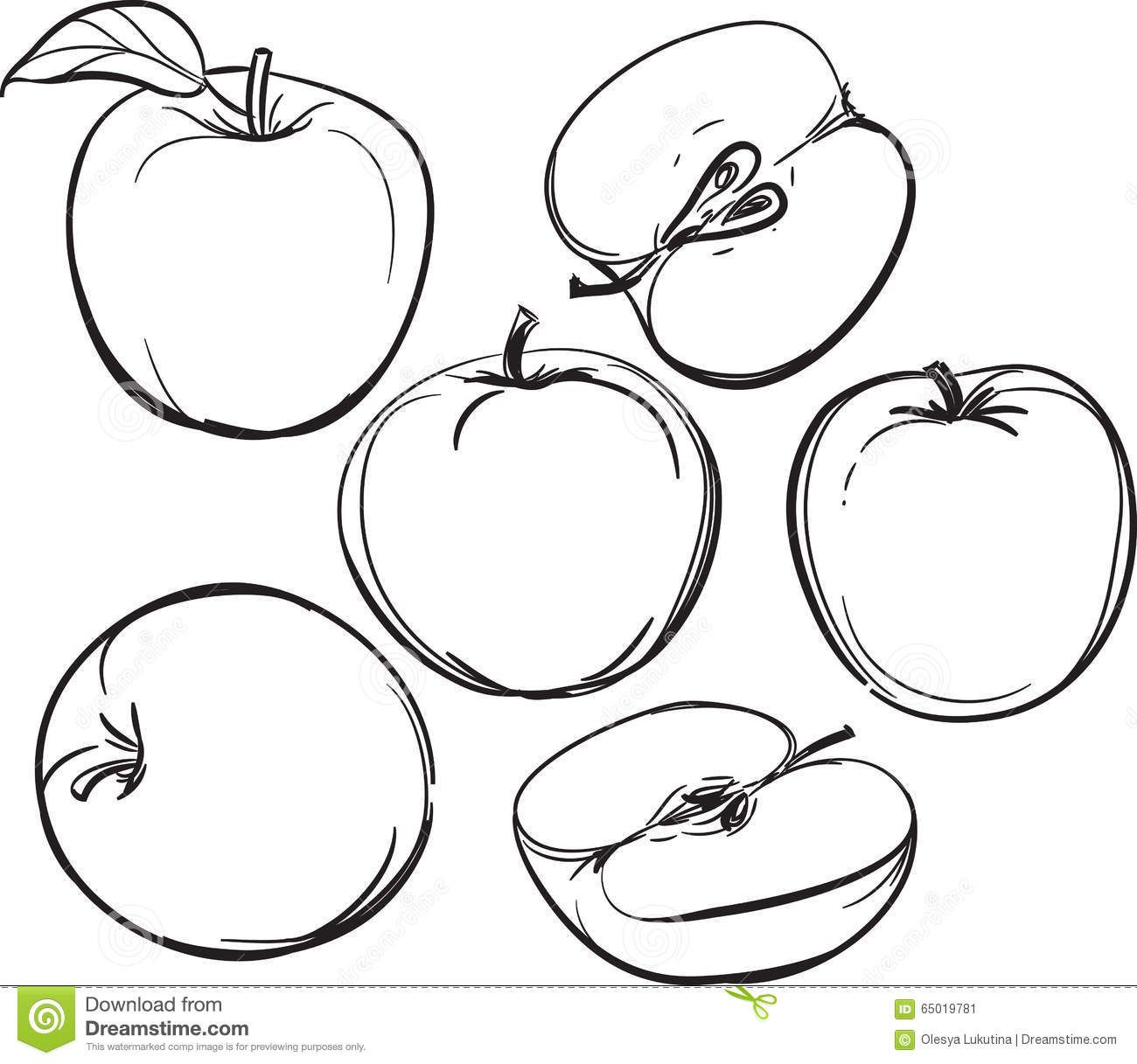 Apple. Line Drawing Of Apples. On A White Background. One