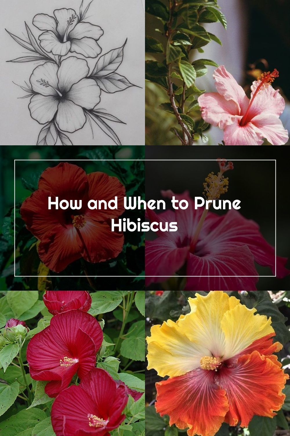 How And When To Prune Hibiscus Hunker In 2020 Hibiscus Prune Plants