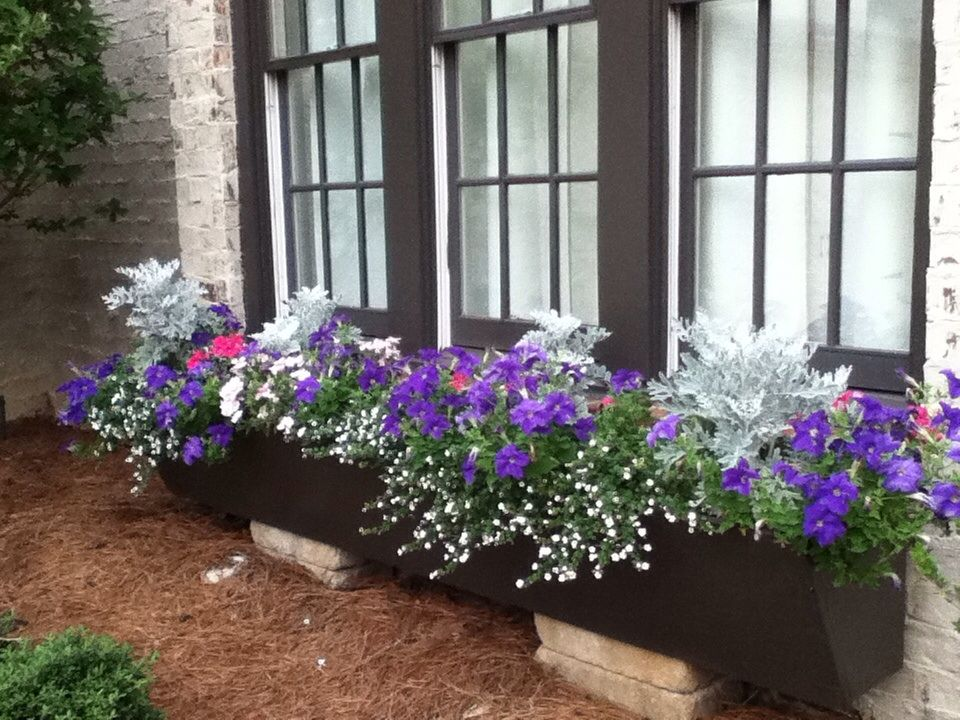 Purple Pansies Pink Petunias Dusty Miller And Trailing White Bacopa Grace The Large Flowerbox We Built And Installed Pflanzen Dusty Miller Idee