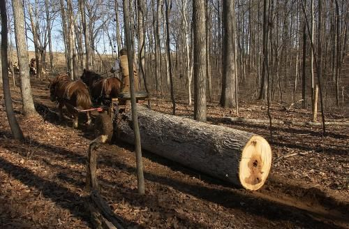 A great way for your small scale logging business to take advantage of the green market and carve out your own niche by logging with horses and a portable sawmill.