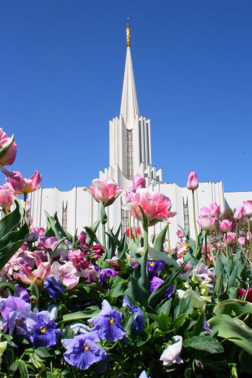 LDS Temple Flowers