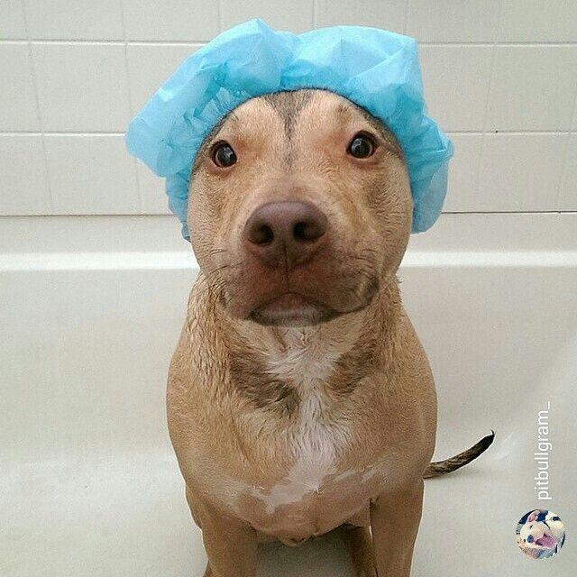 I Am So Putting A Shower Cap On Bobo Next Time He Gets A Bath