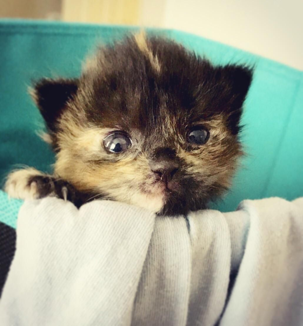 Rescued At 3 Days Old This Is Her First Day Alert Cute Kittens Cute Pictures Animals
