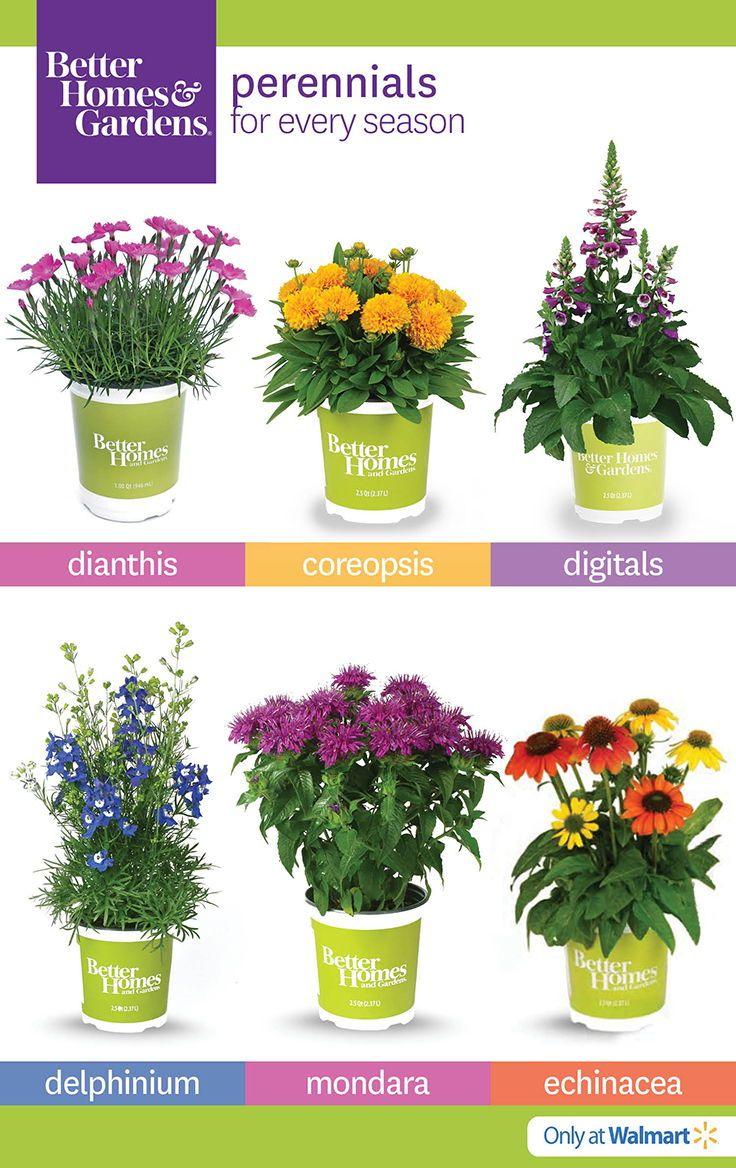 Better Homes U0026 Gardens At The #Walmart #Garden Center #flowers #gardening  #perennials #plants | BHG Live Better | Pinterest | Perennials, Plants And  Gardens