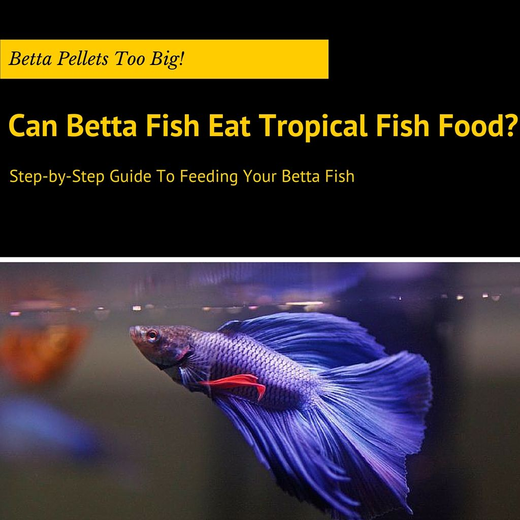what do betta fish eat only use these 5 best types of