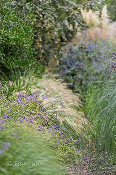 Garten modern pflegeleicht bepflanzen