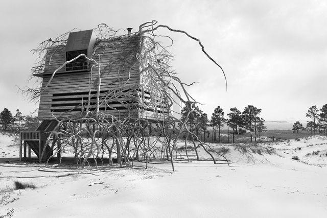 Haus Auf Stelzen Mit Der Natur Verwachsen Dionisio Gonzalez