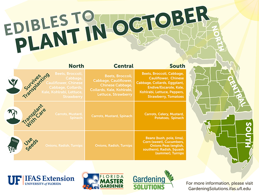 Edible food vegetable plants to start in october in north - South florida vegetable gardening ...