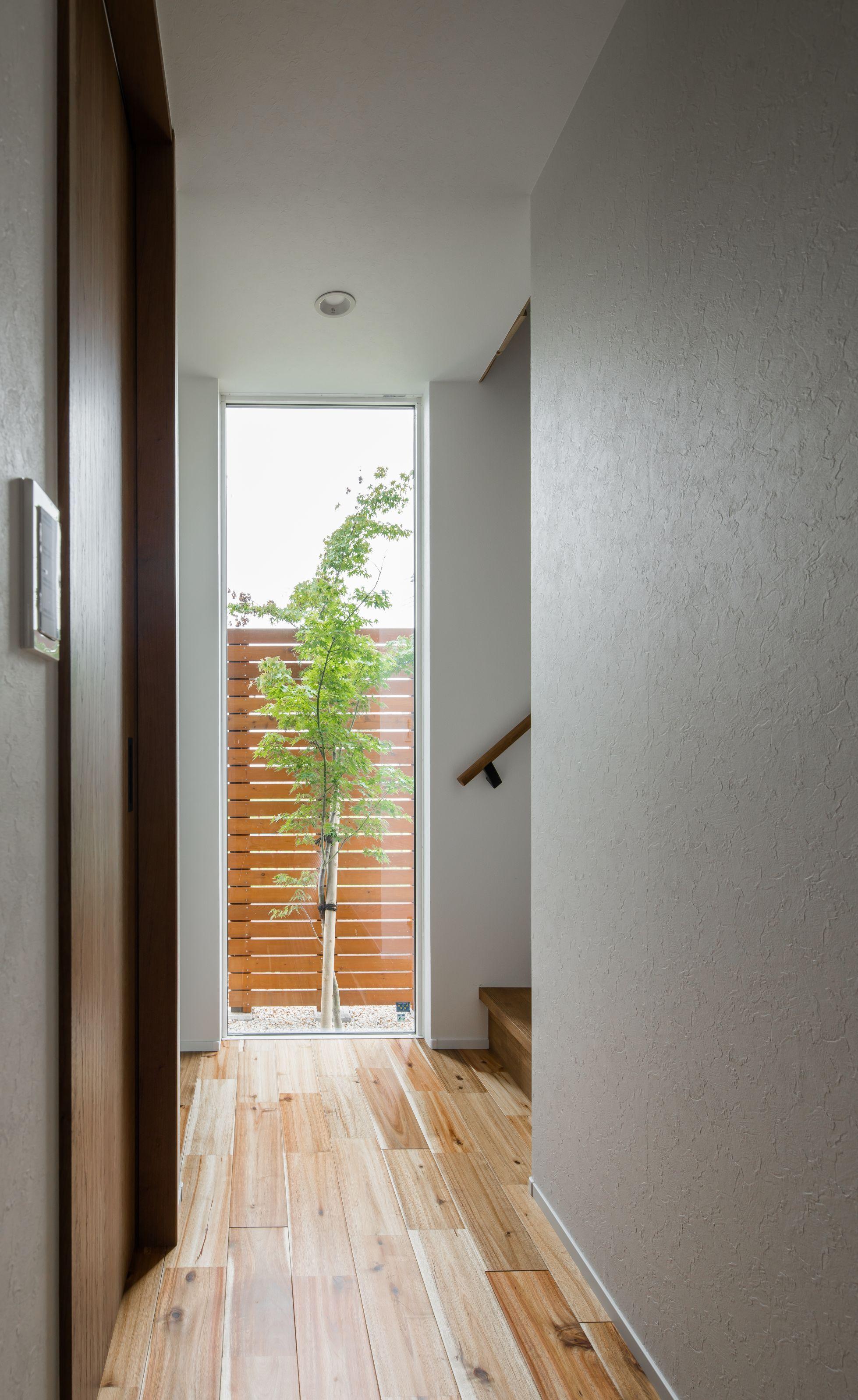 玄関奥の窓からシンボルツリーの紅葉が季節を告げる ルポハウス