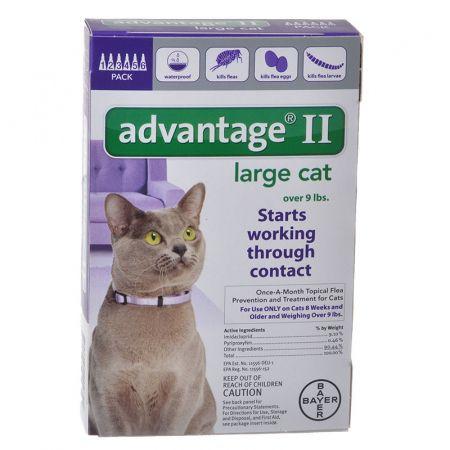 Pin On Cat Fleas Treatment