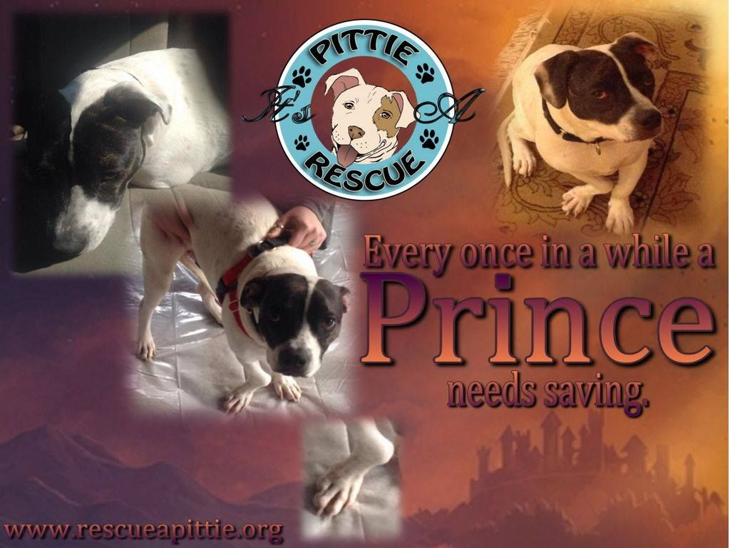 Https Www Youcaring Com Medical Fundraiser Helping Us Help Them Prince Eva Frodo 154642 Three Pups Who Need Orthopedic Surgery Pitties Rescue Animal Rescue