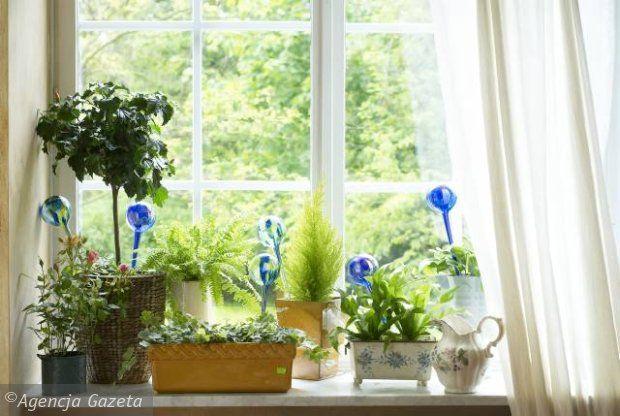 Podlewanie Podczas Urlopu Praktyczny Poradnik Plants