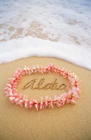 Aloha Wallpaper Iphone5
