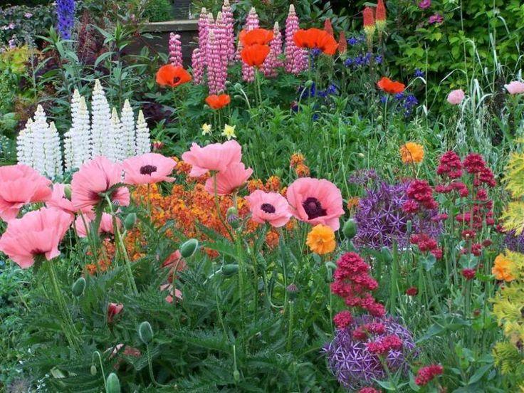 Beautiful English Gardens Poppy Lauren Vintage In An